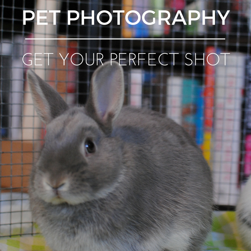 Pet Photography Tips(1)