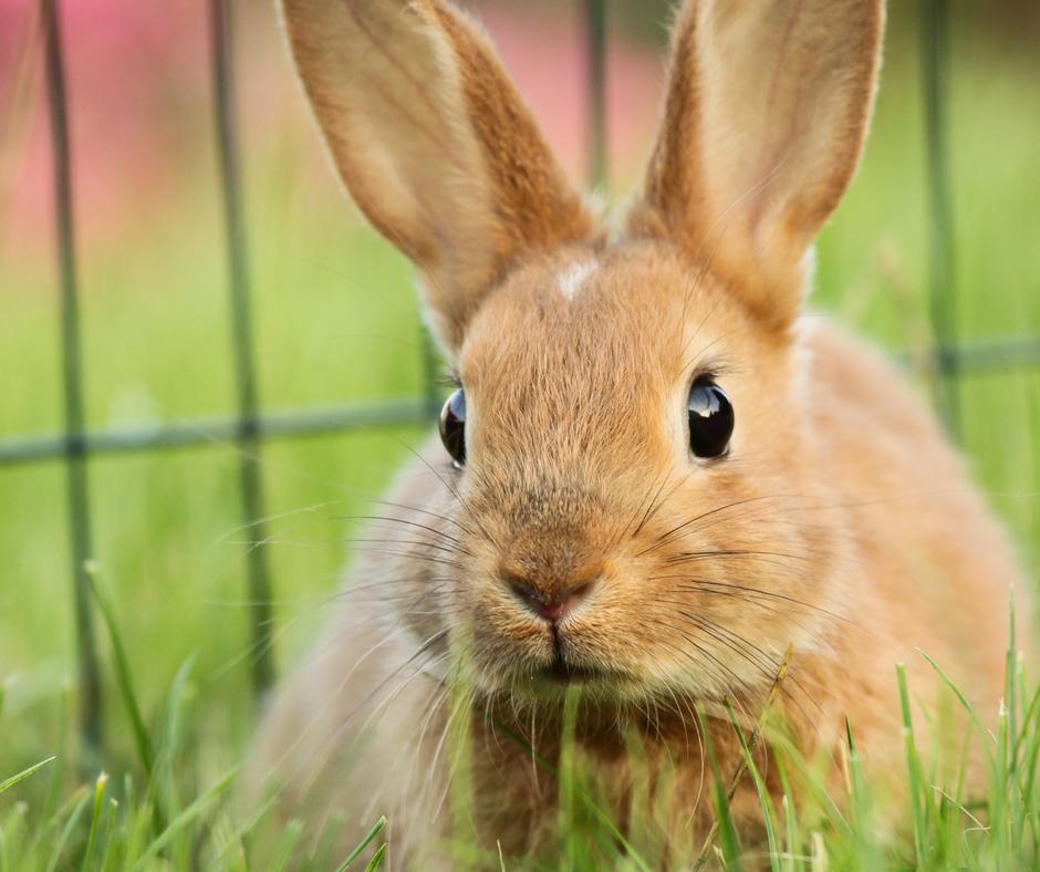How to Bond Rabbits (2)