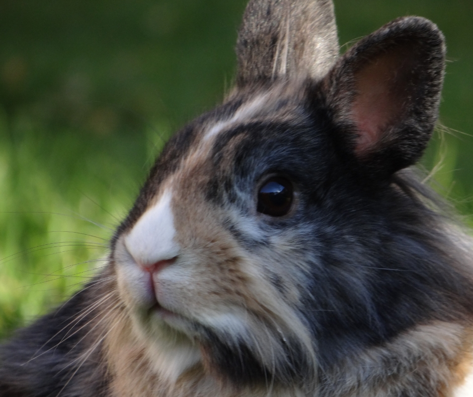 Today I'm going to try and answer some of the most popular questions about keeping rabbits as pets! If you have other questions feel free to leave them in the comments and I'll answer them as best I can and possibly add them to the post!